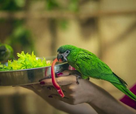 Papugarnia - Amazonia